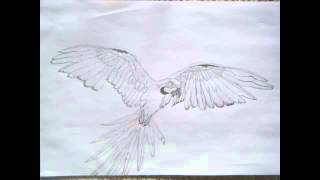 Parrot - Pencil Drawing - Step By Step Video