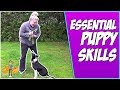 Essential Puppy Skills: simple puppy recall + handling
