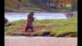 man fights bear ad commercial funny hilarious weird divx mov avi asf film humor