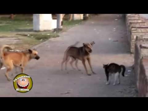 Pisica jegoasa vs câine maidanezii
