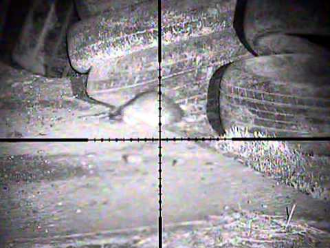 Homemade night vision rat shoot