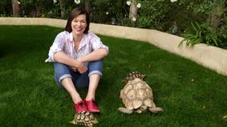 Should kids have pet turtles? Actress Milla Jovovich gives us the answer!