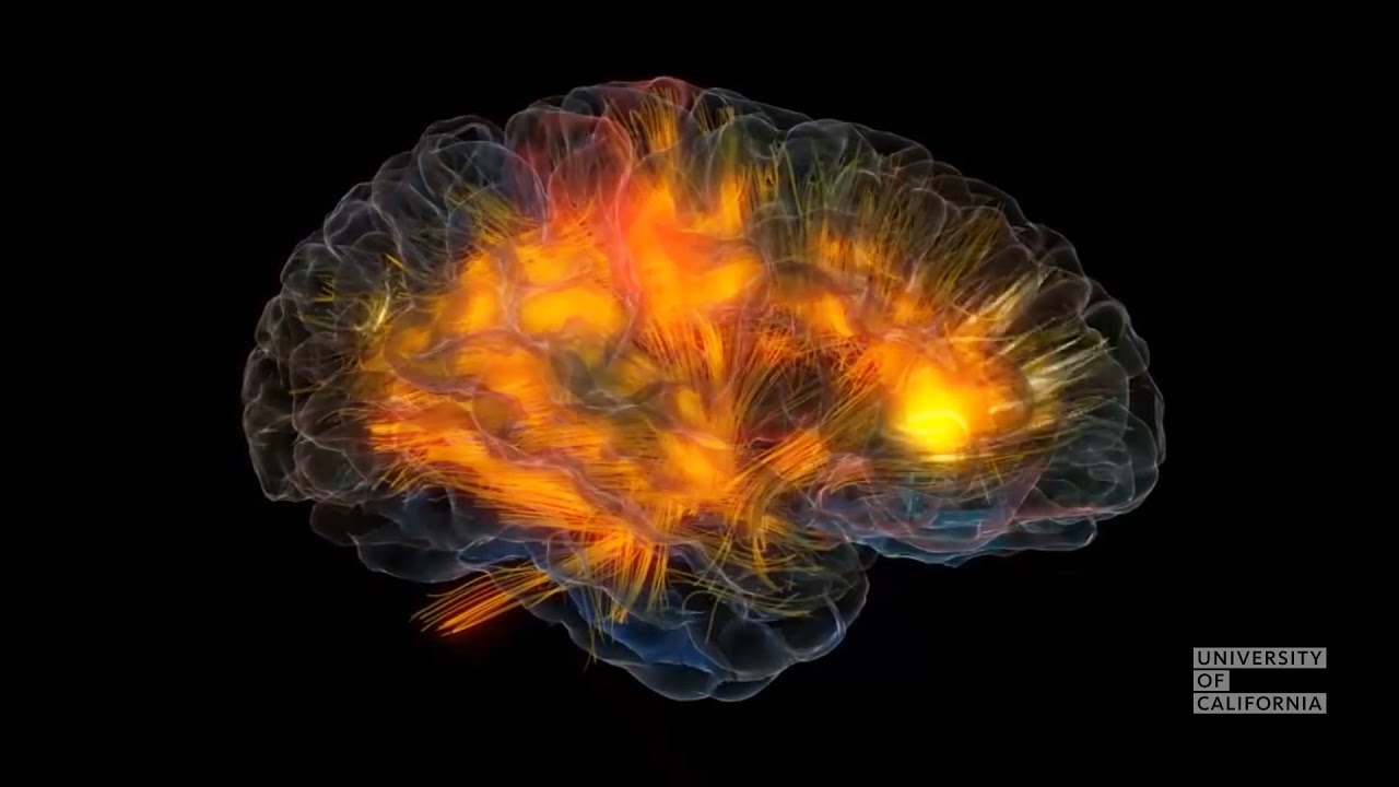 """Download Take a tour of your thoughts with """"Glass Brain"""""""