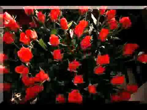 Rote Rosen Song