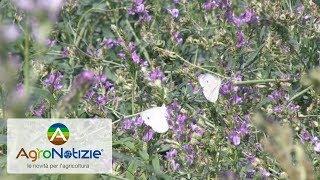 Operation Pollinator: il progetto