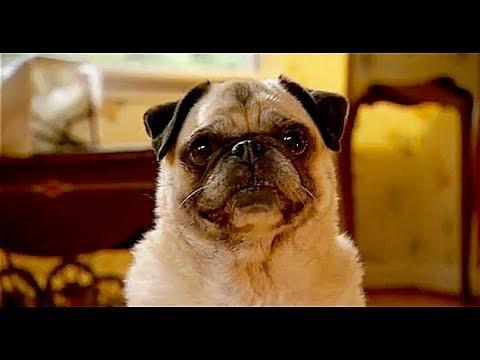 Dog Gone ... cute pug dog in funny short film