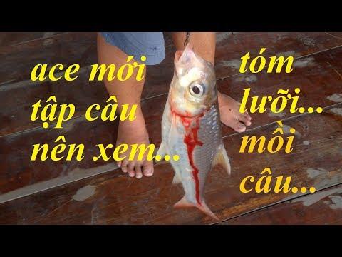 CÂU CÁ MIỀN TÂY TẬP 122 | CÂU ĐƯỢC CÁ CON CÁ LẠ LÀM THỊT ĂN LUÔN | HUYNH KHOA FISHING