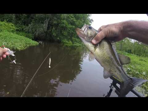 Snakeheads And Bass Fishing In Delaware