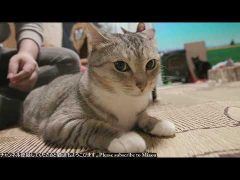 2018.7.30 猫日記   Cats & Kittens room 【Miaou みゃう】