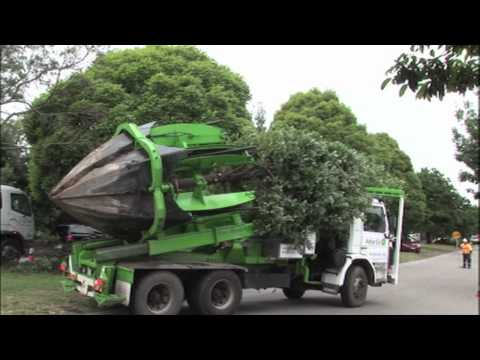 Clyde Road Upgrade - Tree relocation