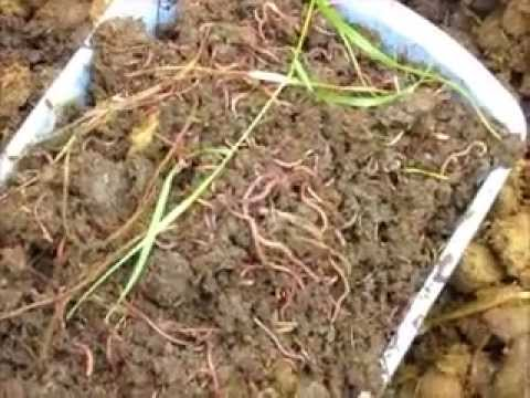 How to find your own supply of free redworms