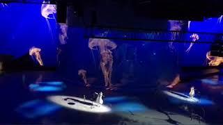 Ледовое шоу Ильи Авербуха «Алиса в стране чудес»