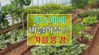 채소재배  비닐하우스의  가을풍경