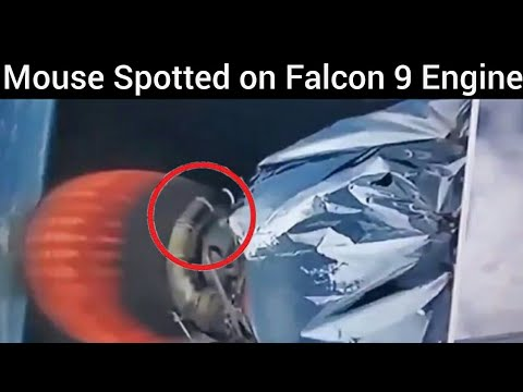 Mouse Spotted on SpaceX rocket || Falcon 9 Rocket Launch