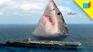 Top 10 Animales Gigantes Descubiertos En El Océano | TheRandomBox