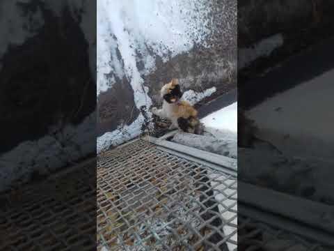 Спасения кота из сетки Кука