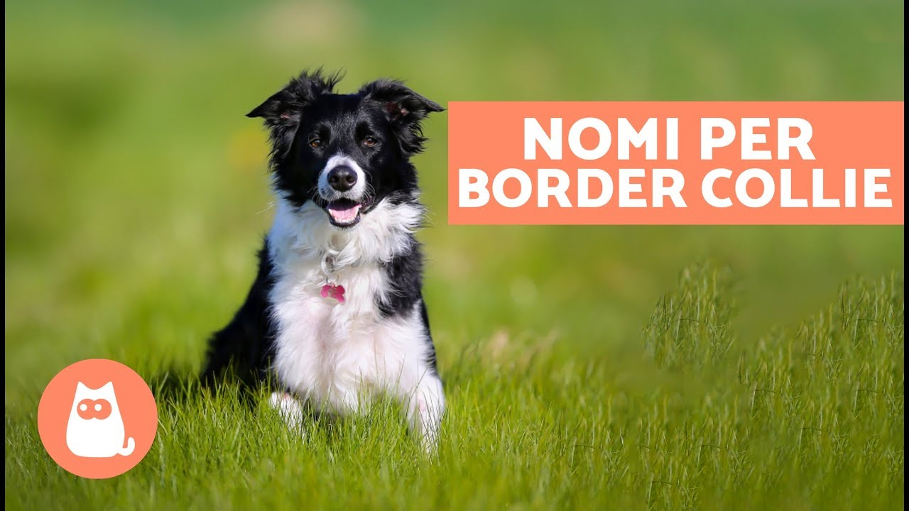 Nomi Belli Per Cani Nomi Per Cani Border Collie Youtube