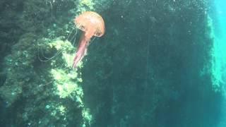 Medusa, Jelly Fish Mallorca