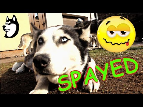 Someone Got SPAYED!!! | Going Over The Names! (2018)