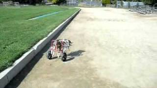 Build-a-dog-wheelchair.wmv