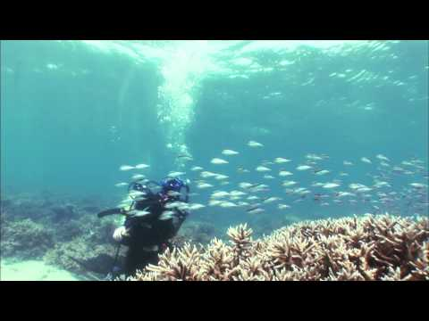 Google Voice Search Experiments: Underwater Teaser