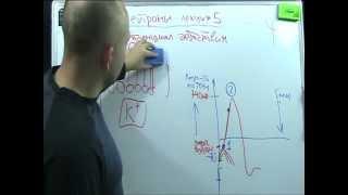 Нейроны лекция  5 - потенциал действия