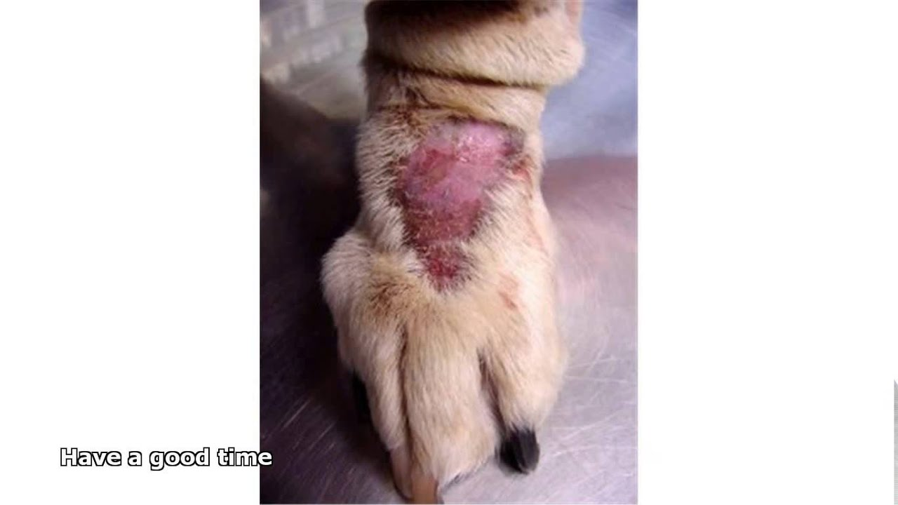 How Can You Get Ringworm From A Dog