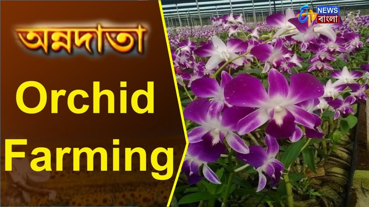 Annadata Orchid Farming 13 November 2017 Etv News Bangla Youtube