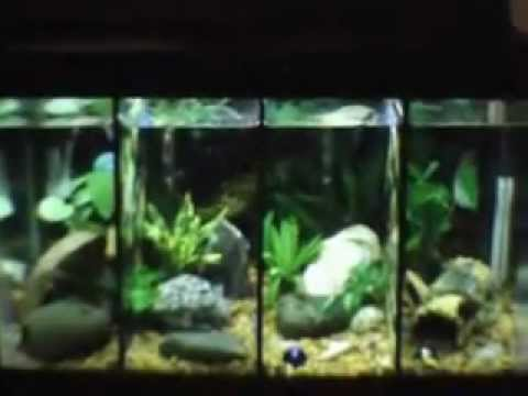 My 10 gallon divided betta tank youtube for Divided fish tank