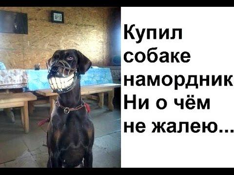 Намордник для коррекции поведения собак