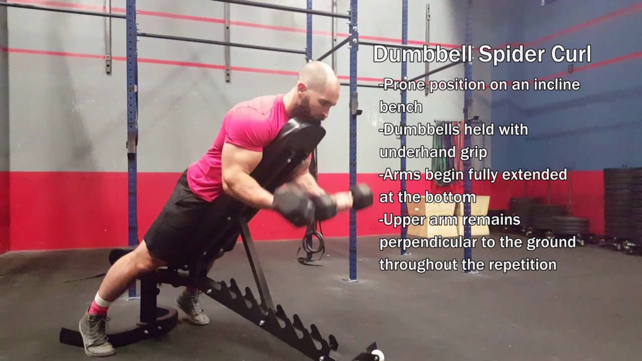 Dumbbell Spider Curl - YouTube