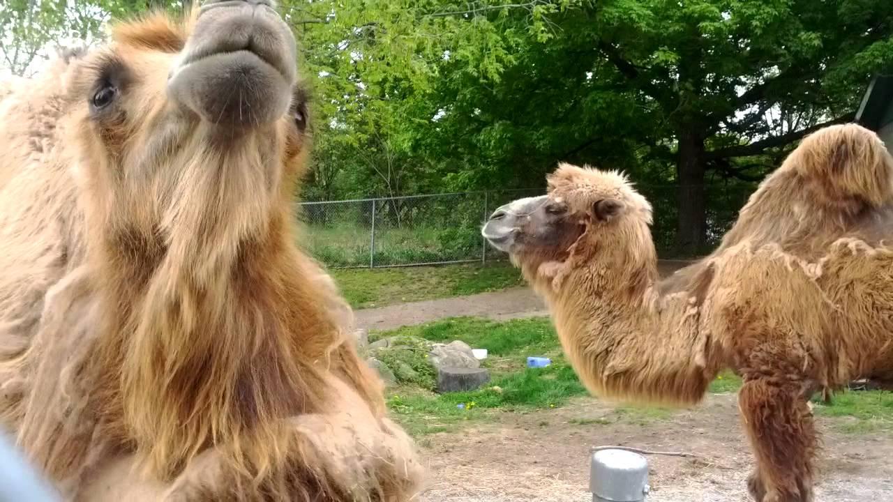 camel camel.camel