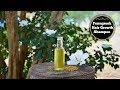 Fenugreek (Methi) Triple Hair Growth Shampoo | Turns Thin Hair Into Thick Hair Fast !!!