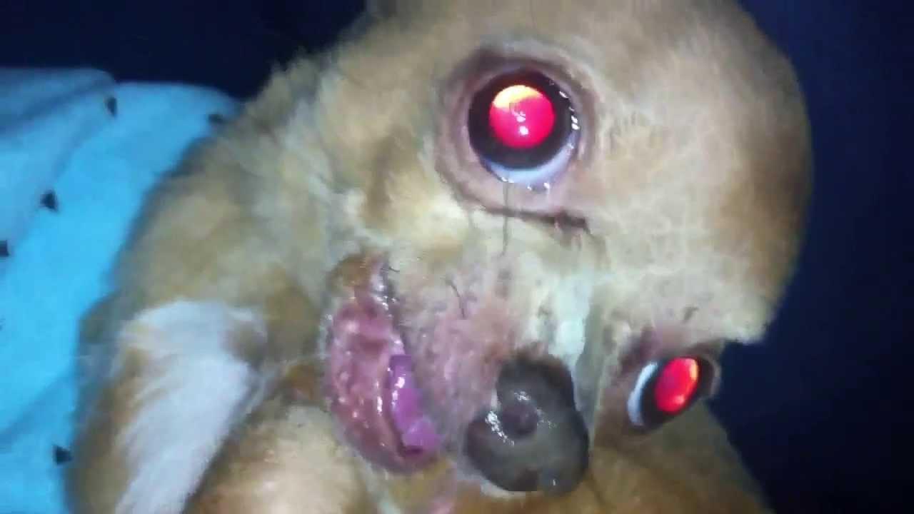 crazy angry demon growling barking chihuahua   youtube