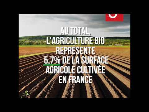 3 chiffres pour comprendre l'essor du bio en France