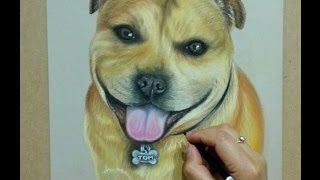 Drawing dog portrait in pastel - Staffordshire bull terrier - Speed drawing