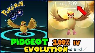 Evolving 100% IV PIDGEY to PIDGEOT (Pokemon GO Evolution)
