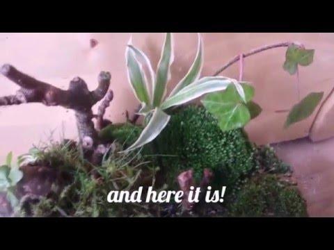 how to make a glass terrarium mini ecosystem comment faire un petit terrarium youtube. Black Bedroom Furniture Sets. Home Design Ideas