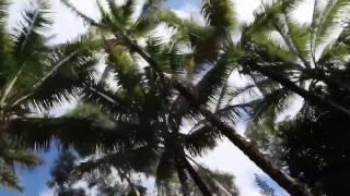 BEACH DAY IN HAWAII 💜🌴🌞❤️