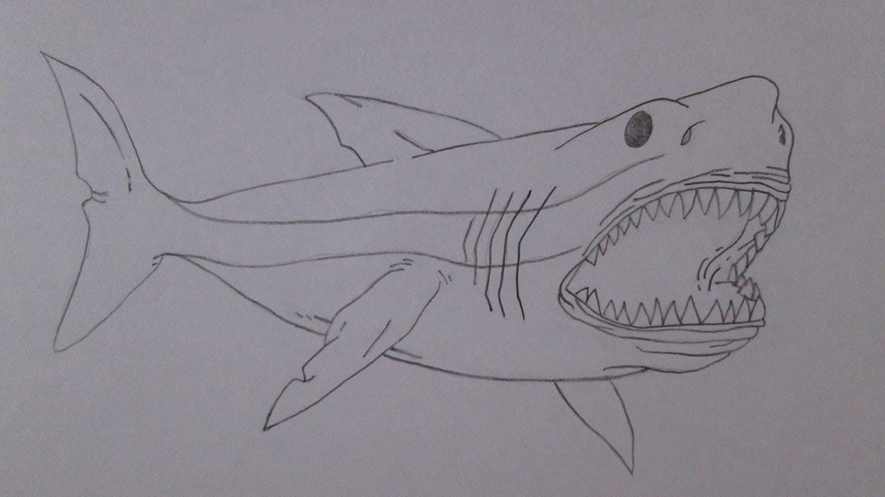 Cómo Dibujar Un Gran Tiburón Blanco
