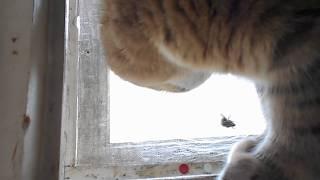 Кошка Ромашка и шмель.