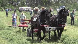 Horse Progress Days 2016, forage harvesting demos