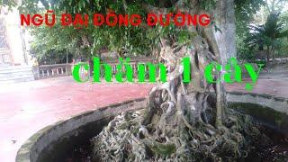 Gambar cover Tiên lão giáng trần phiên bản hà tĩnh, thủy chiến channel