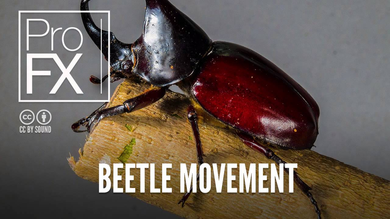 Beetle Movement Animal Sound Effects Profx Sound Sound