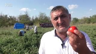 Goranboylu fermer: