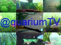 Diffusion en direct de @quariumTV