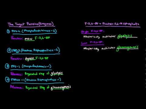 Glucagon Signaling Cascade - GPCR (G-Protein Coupled Receptor)