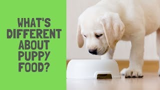 What's Different About Puppy Food?