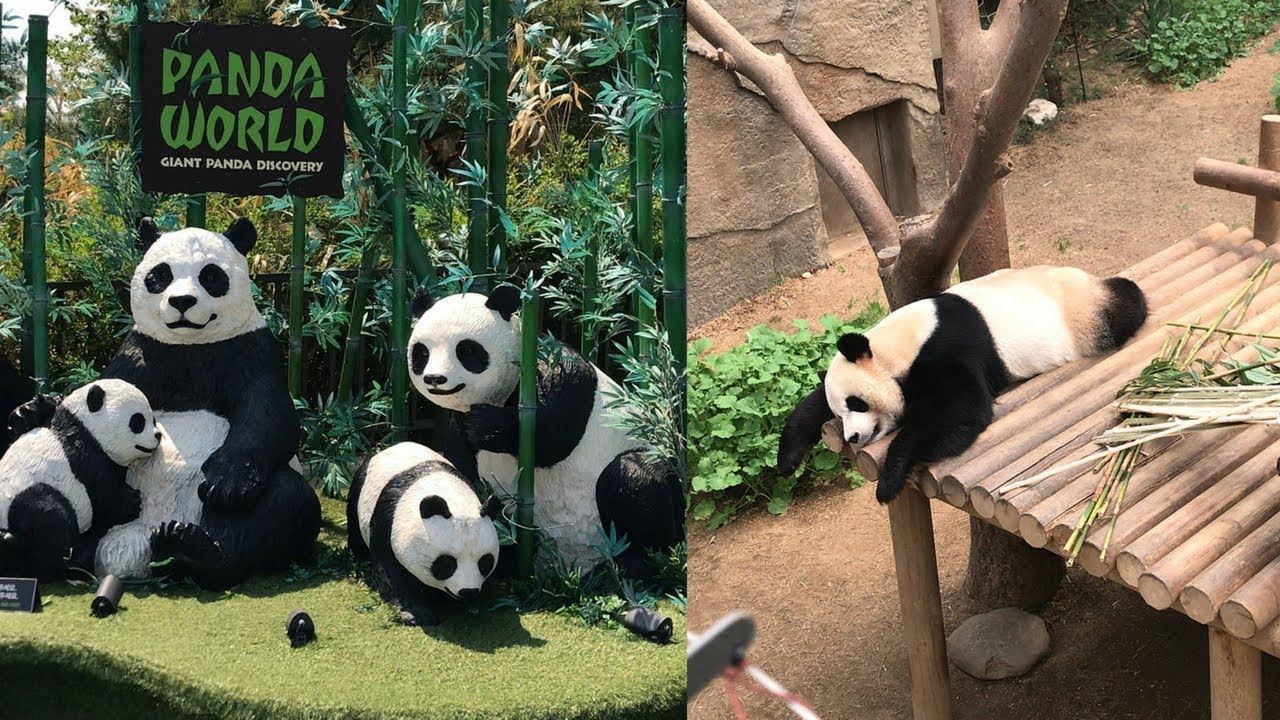 Image result for everland korea panda world