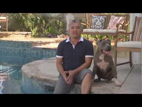 El Encantador De perros - Como Criar El Perro Perfeco